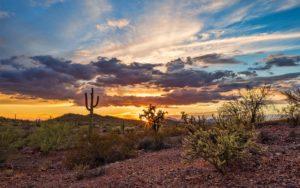 Homepage - Arizona Sky with Cactus Blooming